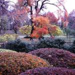 Japanese Garden in Fall. Missouri Botanical Garden